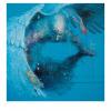Asuntos Internos - Capital del Arte - Artista: Xólotl Polo - Obras de excelente gusto conjugando diversos estilos, formas, corrientes.